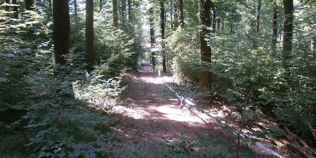 DM13_Strecke_Gruene_Hoelle_acrossthecountry_mountainbike_by Nuetzsche